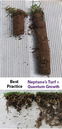 Quantum Growth MicrobeLife Root Growth Soil Health Results