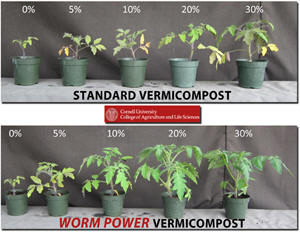 Worm Power Vermicompost Better Growth