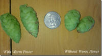 Worm Power Hops Picture