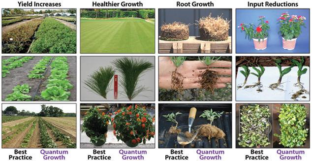 comparison-picture-quantum-growth