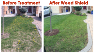 Before and after Branch Creek Weed Shield Treatment