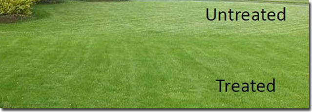 Worm Power untreated vs treated Lawn