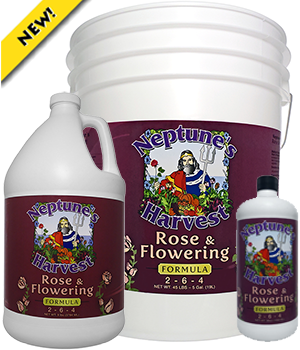 neptunes-harvest-rose-flowering-formula
