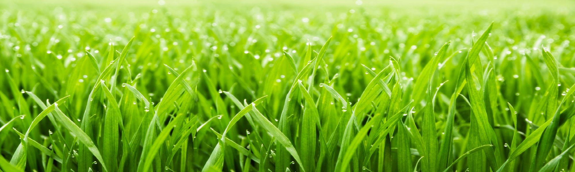 Green Earth AG & Turf Organic Turf Care